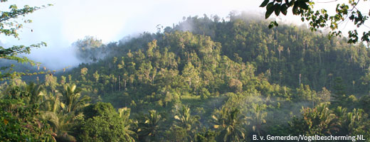 The tropical forests in Gorontalo are a region with a particularly high biodiversity.