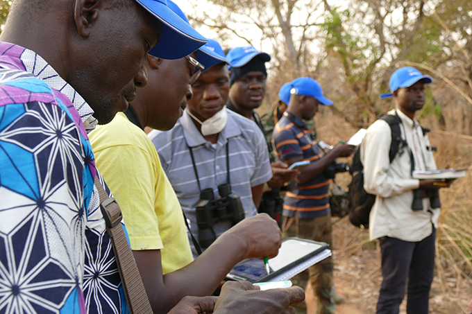Bird monitoring in field in Africa.