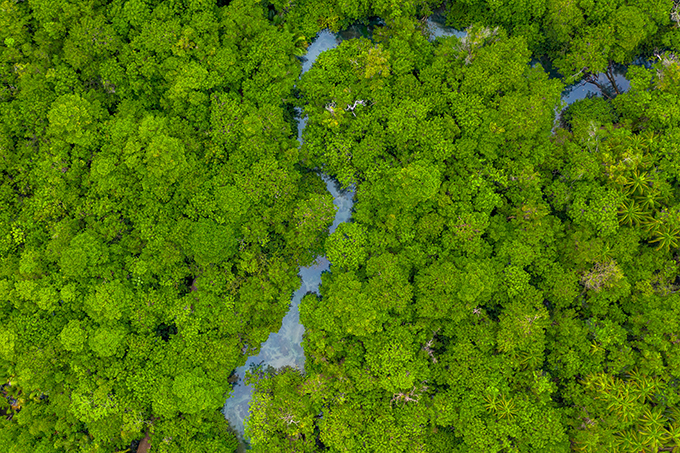 Mangroves in Madagascar - Photo: Adobe Stock / Punchthanun