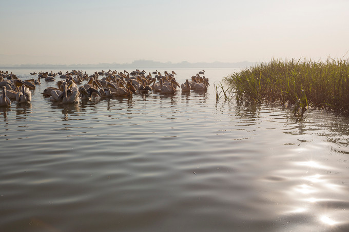 Lake Tana – biodiversity hotspot and home of numerous aquatic birds (Bruno D'Amicis)
