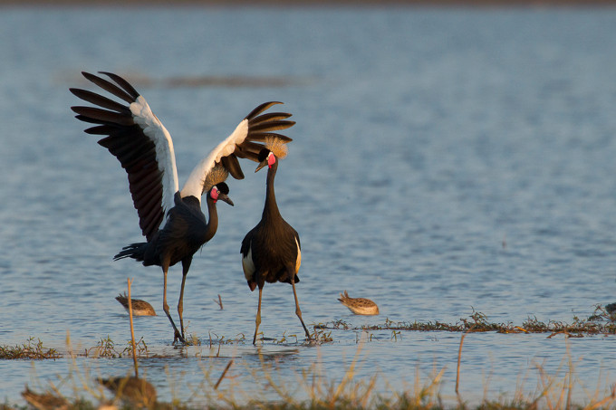 Ethiopias largest lake – important wintering grounds for migratory birds, such as many crane species (Bruno D'Amicis)